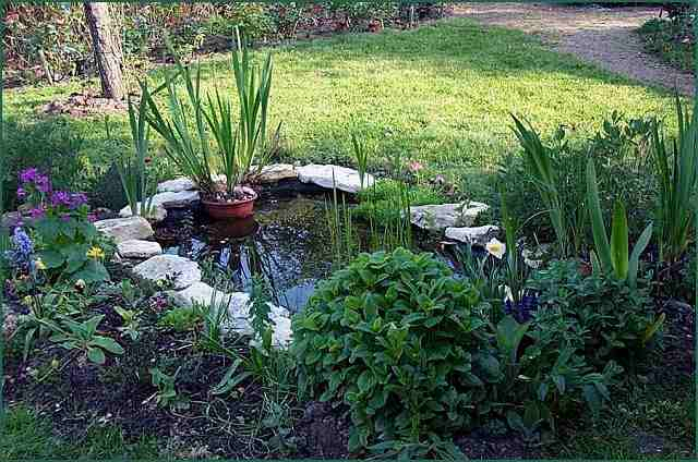 Amenagement de bassin id es de conception sont int ressants - Amenagement de bassins de jardin ...
